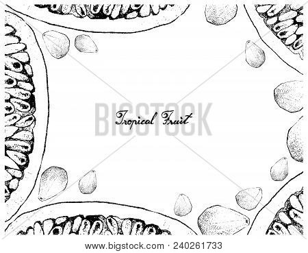 Tropical Fruits, Illustration Frame Of Hand Drawn Sketch Of Banana Passionfruit Or Passiflora Mollis