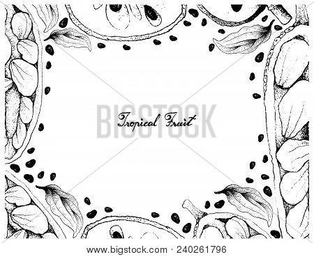 Tropical Fruit, Illustration Frame Of Hand Drawn Sketch Of Cherimoya, Annona Cherimola And Cempedak