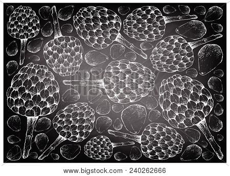 Tropical Fruit, Illustration Wall-paper Background Of Hand Drawn Sketch Of Cherimoya, Annona Cherimo