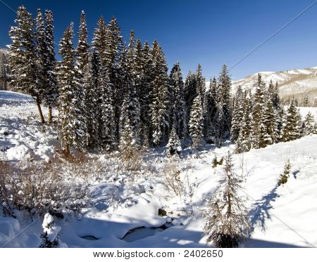 Winter Stand Of Trees Wasatch Mountains With Snow