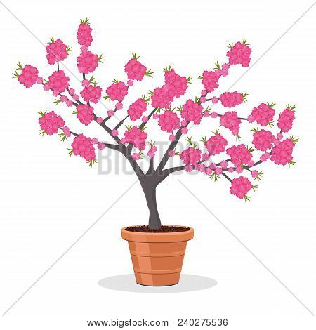 Dwarf Fruit Tree Growing In The Flower Pot. Small Peach Tree In Bloom. Growing Peaches In A Containe