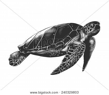 Vector Engraved Style Illustration For Posters, Decoration And Print. Hand Drawn Sketch Of Turtle In