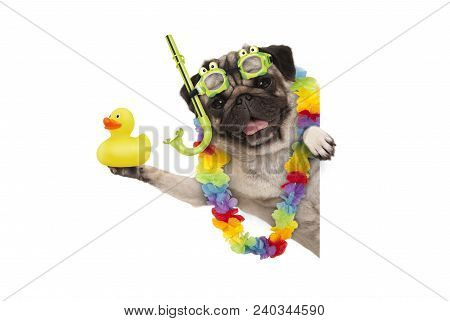 Funny Summer Pug Dog With Hawaiian Flower Garland, Snorkel And Goggles, Holding Up Yellow Ducky, Iso