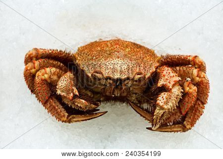 Crab Hairy Far Eastern. Fresh Raw Crab That Have Been Cought And Packed In Ice To Keep Them Fresh On