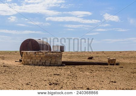 Old Well In Semi-desert. Animals Near Steppe Well