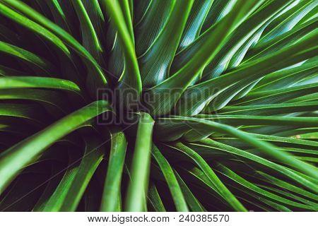 Background Nature Fern Exaltata. Green Leaf. Full Frame