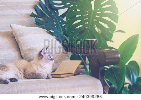Interior Living Room In Rustic Style. Sofa, Coffee Cat.