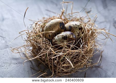 Conceptual Still-life With Fresh Raw Spotted Quail Eggs In Hay Nest Over Grey Background, Close Up,