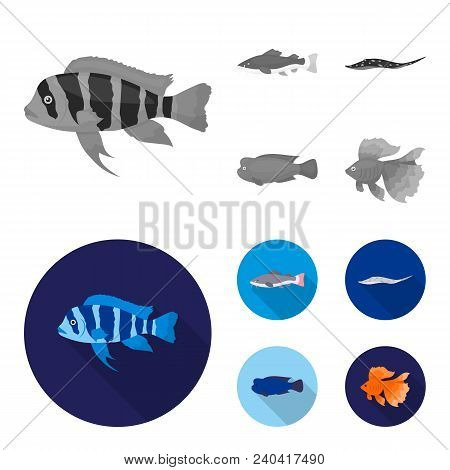Frontosa, Cichlid, Phractocephalus Hemioliopterus.fish Set Collection Icons In Monochrome, Flat Styl