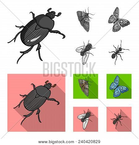 Arthropods Insect Beetle, Moth, Butterfly, Fly. Insects Set Collection Icons In Monochrome, Flat Sty