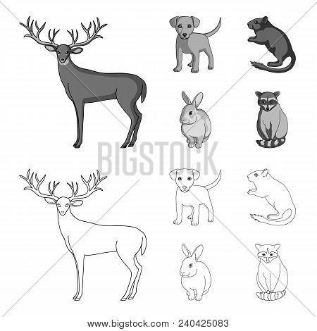 Puppy, Rodent, Rabbit And Other Animal Species.animals Set Collection Icons In Outline, Monochrome S