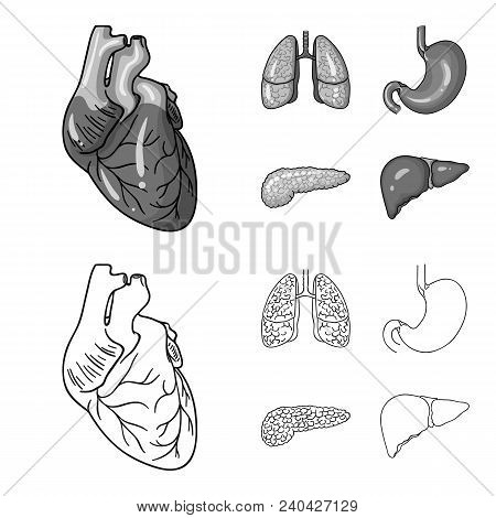 Heart, Lungs, Stomach, Pancreas. Human Organs Set Collection Icons In Outline, Monochrome Style Vect