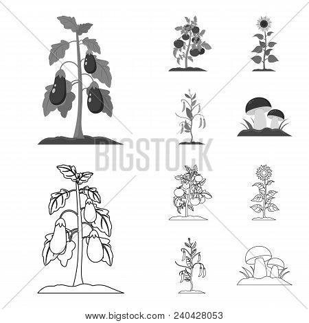 Eggplant, Tomato, Sunflower And Peas.plant Set Collection Icons In Outline, Monochrome Style Vector