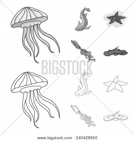 Jellyfish, Squid And Other Species.sea Animals Set Collection Icons In Outline, Monochrome Style Vec