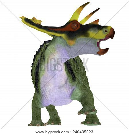 Anchiceratops Dinosaur On White 3d Illustration - Anchiceratops Ornatus Was A Herbivorous Ceratopsia