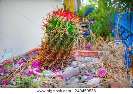 Clouse up of cactus