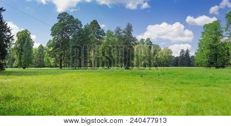 Large Glade Covered With Grass And Flowers On Backgtound Of The Conifers And Deciduous Trees And Sky