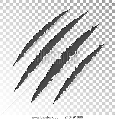 Realistic Scratch Claws Of Animal. Hole In Sheet Of Paper With Torn Edges. Vector Illustration Isola