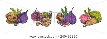 Collection Of Elegant Detailed Natural Drawings Of Fig Isolated On White Background. Bundle Of Whole