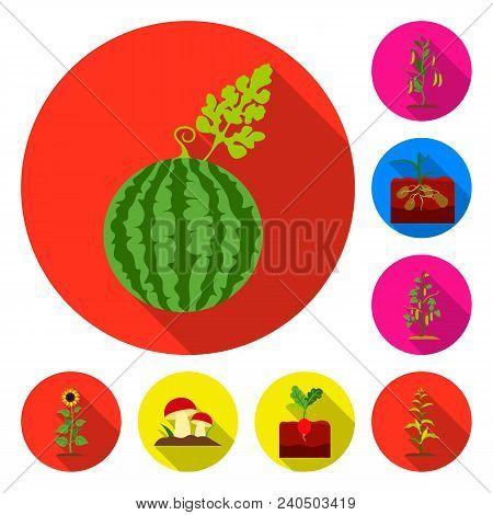 Plant, Vegetable Flat Icons In Set Collection For Design. Garden And Harvest Vector Symbol Stock  Il