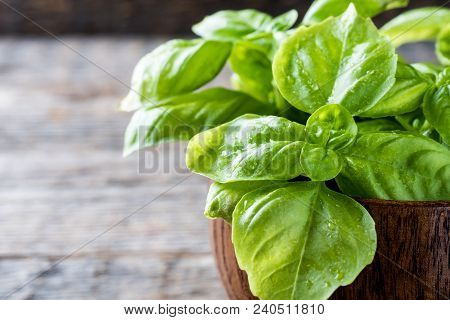 Fresh Basil In A Bowl Of Wood On A Rustic Table