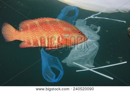 Plastic pollution problem. Fish swimming in polluted sea. Plastics contaminate seafood