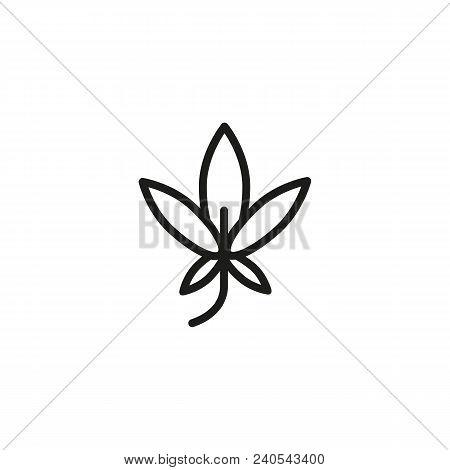 Hickory Leaf. Flat Thin Line Illustration. Sycamore, Cannabis, Marijuana. Leaf Concept. For Nature,