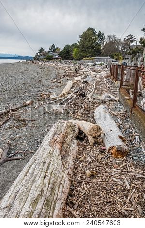 Driftwood Lines The Shoreline In West Seattle , Washington. The Olympice Mountains Are In The Distan