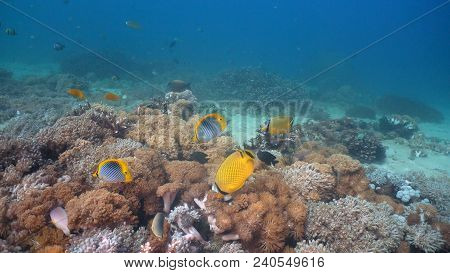 Fish And Coral Reef At Diving. Wonderful And Beautiful Underwater World With Corals And Tropical Fis