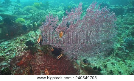Tropical Fish On Coral Reef At Diving. Wonderful And Beautiful Underwater World With Corals And Trop