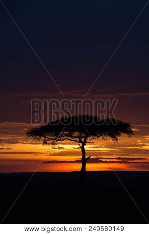 Sunset Over A Savannah In Masai Mara Game Reserve, Kenya.