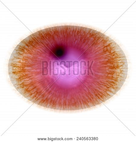 Rentgen Photo. Isolated Elliptic Animal Red Eye With Large Pupil And Bright Retina. Shinning Iris Ar