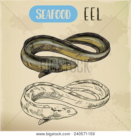 Electric, Mud Or Snake Eel Or Spiny Conger Fish. Sketch Of Seafood For Unadon Dish Or Restaurant Men