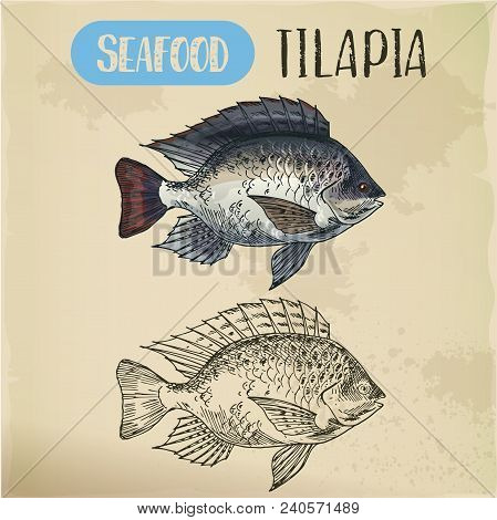 Sign With Tilapia Or Cichlid Fish. Sketch Of Fish Or Hand Drawn Seafood Trophy, Water Animal For Res