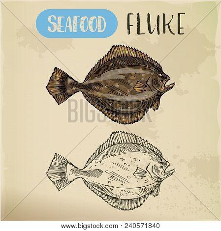 Hand Drawn Summer Flounder Or Fluke. Sketch Of Seafood For Shop Or Store Signboard, Restaurant Menu
