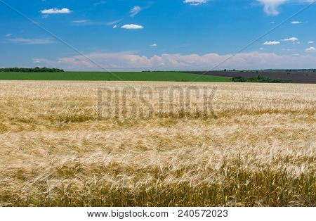Landscape With Crop Fields And Blue Sky In June Near Dnipro City, Ukraine