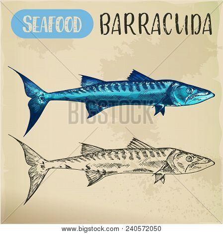 Ray-finned Barracuda Sketch. Hand Drawn Atlantic Ocean Or Red Sea Seafood Fish For Restaurant Menu O
