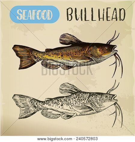 Bullhead Sketch For Fish Store Or Shop Signboard. Miller And Freshwater, Common And Siberian Sculpin