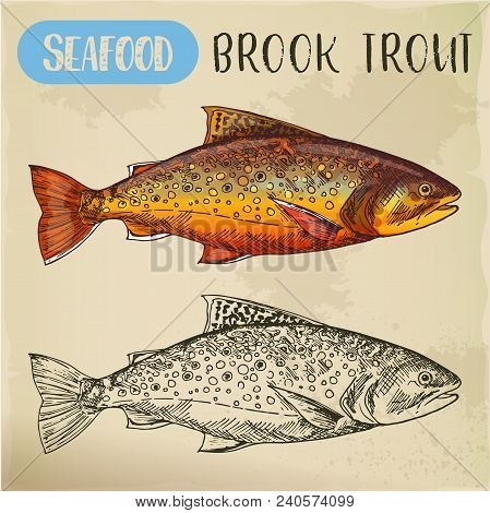 Sketch of eastern brook or speckled, charr or mud trout. Hand drawn squaretail. Seafood, fish for market signboard or fishing club sign. Catch and underwater wildlife, nautical and nature theme poster