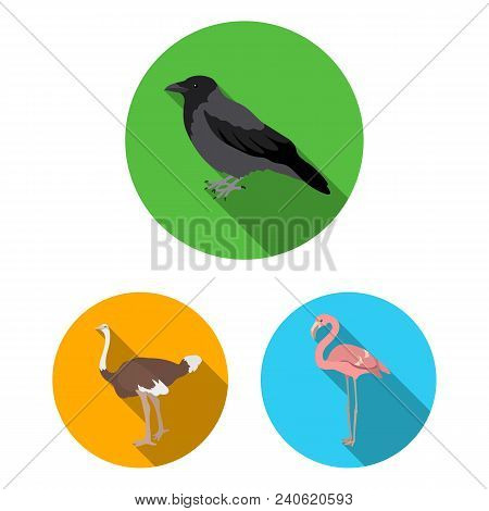 Types Of Birds Flat Icons In Set Collection For Design. Home And Wild Bird Vector Symbol Stock  Illu