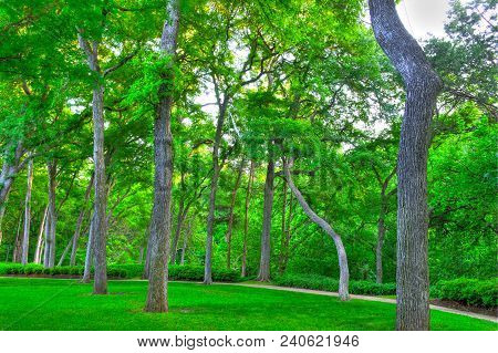 Hdr Photography In Dallas, Texas On Turtle Creek , Spring Landscape With Beautiful Tall Green Trees
