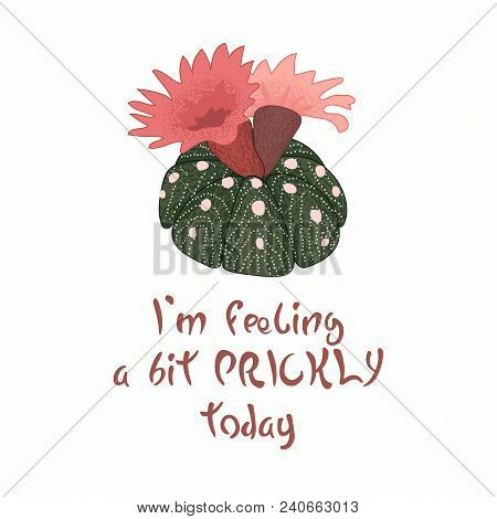 Hand Written Lettering Message Slogan I'm Feeling A Bit Prickly Today With Blooming Cactus Image. Pi