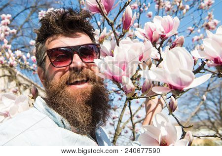 Man With Beard And Mustache Wears Sunglasses On Sunny Day, Magnolia Flowers On Background. Springtim