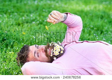Macho With Daisies In Beard Relaxing. Bearded Man With Daisy Flowers In Beard Lay On Grassplot, Gras