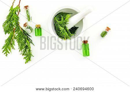 Harvest Juniper As Medical Herbs. Make Juniper Oil. Juniper Sprigs In Mortar On White Background Top