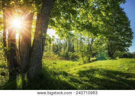 Summer Landscape Of Green Nature With Bright Sun And Clear Blue Sky In Morning. Countryside View On