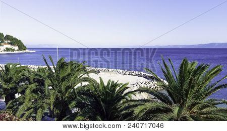 Palm And Adriatic Sea In Podgora, Makarska Riviera, Dalmatia, Croatia