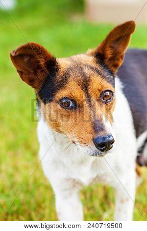 Photo Mongrel Dog Outdoors Close Up