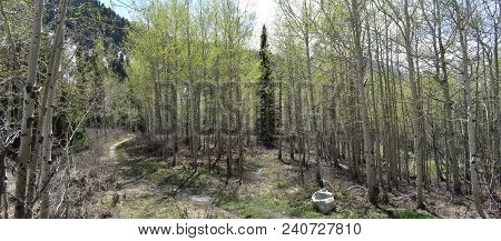 Panoramic Views Of Wasatch Front Rocky Mountains From Little Cottonwood Canyon In Early Spring With