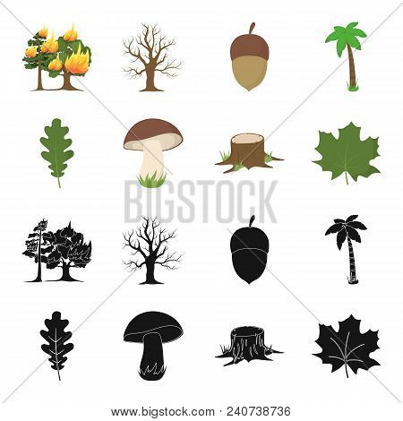 Oak Leaf, Mushroom, Stump, Maple Leaf.forest Set Collection Icons In Black, Cartoon Style Vector Sym